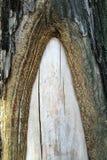Corteccia di albero del fondo Immagine Stock