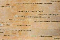 Corteccia di albero dell'Aspen immagine stock libera da diritti