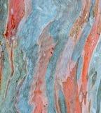 Corteccia di albero dell'eucalyptus del Rainbow immagini stock