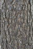 Corteccia di albero dell'ontano Immagine Stock