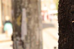 Corteccia di albero della città con i vecchi perni su una priorità alta e su un fondo urbano Fotografia Stock Libera da Diritti