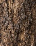 Corteccia di albero della crepa Fotografia Stock Libera da Diritti