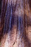 Corteccia di albero della sequoia fotografia stock libera da diritti