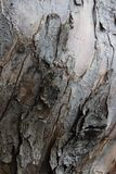 Corteccia di albero dettagliata, fine su immagine stock libera da diritti