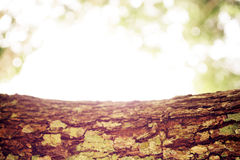 Corteccia di albero e bokeh della luce verde fondo-morbido sfuocato Fotografia Stock
