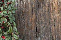 Corteccia di albero e foglie verdi Fotografie Stock
