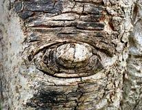 Corteccia di albero di forma dell'occhio immagine stock