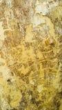 Corteccia di albero di Jamjuree immagini stock