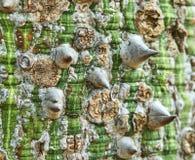 Corteccia di albero nei toni marroni verdi immagine stock