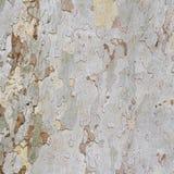 Corteccia di albero piano Immagine Stock Libera da Diritti