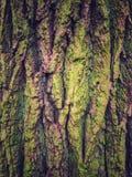 Corteccia di albero strutturata Fotografie Stock