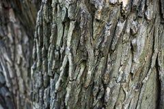 Corteccia di albero strutturata per un fondo Legno, naturale, industriale immagini stock libere da diritti