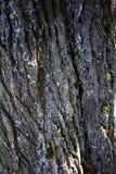 Corteccia di albero strutturata per un fondo spettacolare fotografie stock libere da diritti