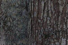 Corteccia di albero su una piantagione della Nord Carolina fotografia stock
