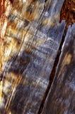 Corteccia di albero sulla traccia superiore del ciclo di Bristlecone, Mt Charleston, Nevada fotografia stock