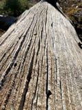Corteccia di albero sulla traccia superiore del ciclo di Bristlecone, Mt Charleston, Nevada fotografia stock libera da diritti