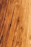 Corteccia di albero sulla traccia superiore del ciclo di Bristlecone, Mt Charleston, Nevada fotografie stock libere da diritti