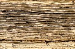 Corteccia di albero sulla traccia superiore del ciclo di Bristlecone, Mt Charleston, Nevada immagine stock