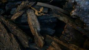 Corteccia di albero tagliata stock footage