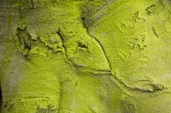 Corteccia di albero verde fotografie stock
