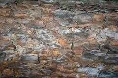 Corteccia di Brown dell'albero Immagine Stock Libera da Diritti