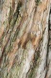 Corteccia di Brown di un albero Immagini Stock Libere da Diritti