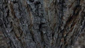 Corteccia di grande albero video d archivio