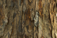 Corteccia di legno Immagine Stock