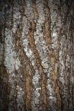 Corteccia di legno astratta di struttura Fotografie Stock