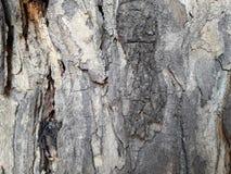 Corteccia di legno astratta di struttura Immagine Stock