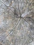 Corteccia di legno del ceppo fotografie stock libere da diritti