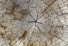 Corteccia di legno del corpo dell'albero Fotografie Stock