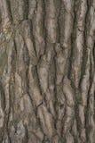 Corteccia di pino Fotografia Stock Libera da Diritti