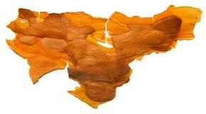 Corteccia di pino incrinata isolata su fondo bianco, manip della foto Fotografia Stock Libera da Diritti