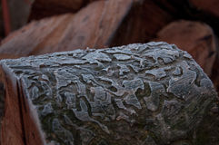 Corteccia di quercia congelata con le linee Immagini Stock Libere da Diritti