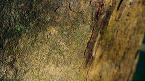 Corteccia di struttura dell'albero fotografia stock