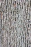 Corteccia di struttura dell'albero immagini stock libere da diritti