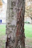 Corteccia di un albero fotografia stock libera da diritti