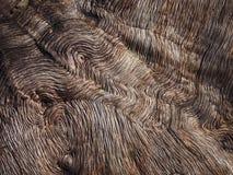 Corteccia di un albero fotografie stock