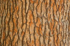 Corteccia di un albero Immagini Stock