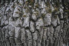 Corteccia di un albero fotografia stock
