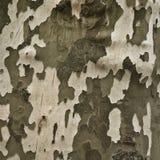 Corteccia di un albero piano Fotografie Stock Libere da Diritti