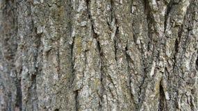 Corteccia di un fondo di struttura di lerciume dell'albero fotografia stock