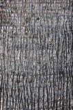 Corteccia di una palma, struttura fotografie stock libere da diritti