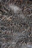 Corteccia di una palma, struttura immagini stock libere da diritti