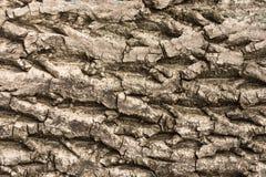 Corteccia di vecchi grandi dadi di sollievo per struttura del fondo Immagine Stock