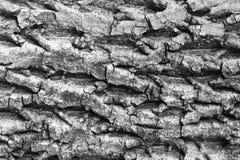 Corteccia di vecchi grandi dadi di sollievo per struttura del fondo Fotografia Stock