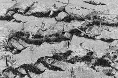 Corteccia di vecchi grandi dadi di sollievo per struttura del fondo Fotografie Stock