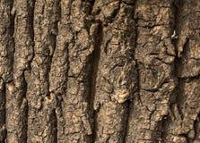 Corteccia di vecchi grandi dadi di sollievo per struttura del fondo Immagini Stock