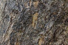 Corteccia di vecchio modello di legno del fondo di struttura dell'albero Fotografie Stock